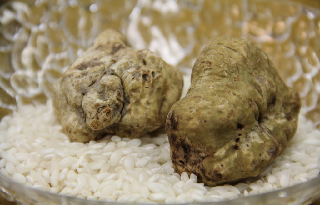 Das weiße Gold aus der Toskana kommt in den kommenden Wochen im 5-Cinco auf den Tisch